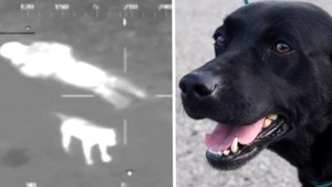 Dieser Hund harrte 7 Stunden bei seinem im Sumpf steckenden Besitzer aus, bis er gefunden wurde