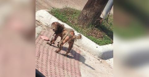 Das Foto dieses Hundes machte die Runde im Netz... und verhalf ihr zu einem neuen Leben