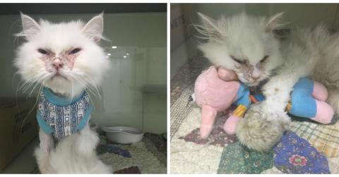 Eine Frau adoptiert eine Katze und rettet sie so vor dem Einschläfern