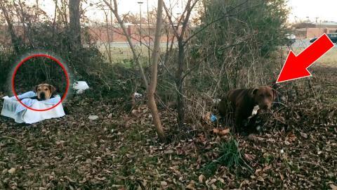 Eine Frau rettet einen ausgesetzten Hund, der sich schon aufgegeben hatte