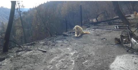 Kalifornien-Brände: Besitzerin lässt ihren Hund zurück. Seine Reaktion erschüttert