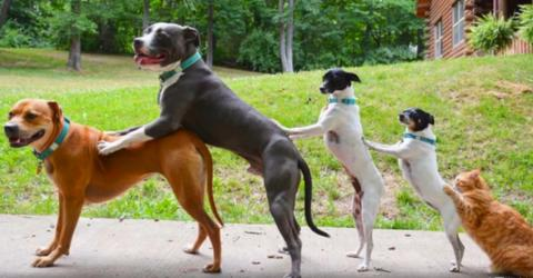 Eine glückliche Familie: Ein Paar, sieben gerettete Tiere und bald Nachwuchs...