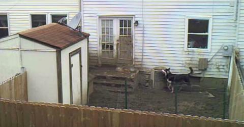 Vom Fenster aus filmt er, was sein Nachbar im Hinterhof wirklich treibt