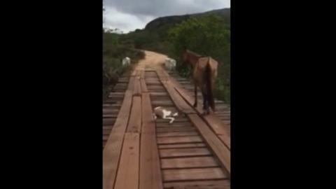 Ein Mann sieht ein bewegungsloses Pferd, das zu Boden blickt. Er schreitet sofort zur Tat