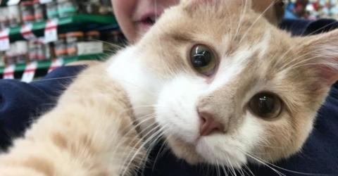 Die Katze versteht plötzlich, dass sie endlich adoptiert wurde