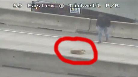 Dieser Mann ist ein Held. Er hat diesen Hund vor einem sicheren Tod gerettet.
