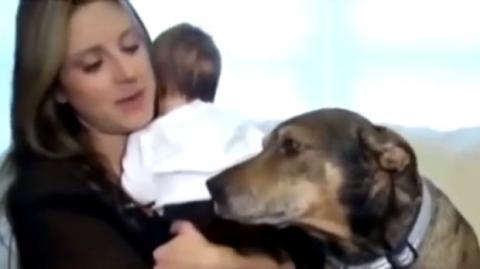 Dieser Hund hat ein Baby gerettet. Sein Mut wird Sie verblüffen.
