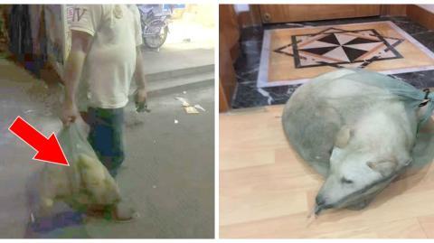 Er kauft einen Hund in einer Tüte, wie ein Stück Fleisch. Doch er hat etwas ganz anderes mit ihm vor