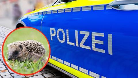 Düsseldorf: Igel löst Polizeieinsatz aus!