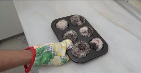 Ungewöhnliche Muffins: Statt Teig gibt er etwas ganz Anderes in den Ofen