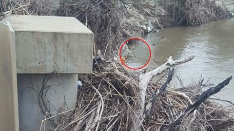 Eine Frau rettet einen Hund, der an einem Ufer zwischen Zweigen und Schutt festsaß