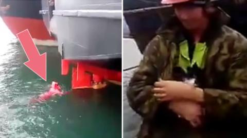 Eine im Ruder eines Bootes eingeklemmte Katze wird durch die wunderbare Geste eines Matrosen gerettet.