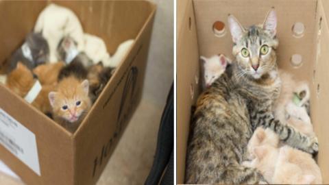 Eine Katze hat 14 ausgesetzte Katzenbabys gerettet