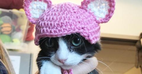 Süßes Kätzchen - doch unter der Mütze steckt seine traurige Vergangenheit
