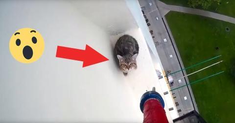 Katze wurde vom Fenstervorsprung des zwölften Stocks gerettet