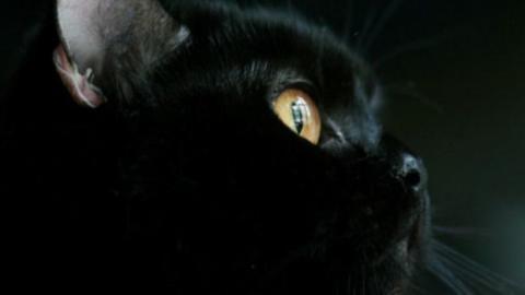 Er adoptiert eine schwarze Katze. Kurz danach rettet sie ihm das Leben