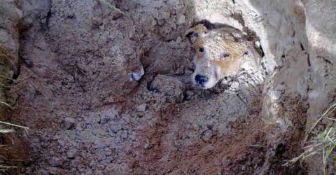 Sie wird lebendig vergraben - doch das Schicksal meint es gut