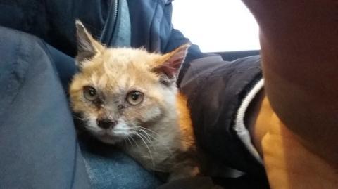 Als sie diese Katze in jämmerlichem Zustand sieht, nähert sie sich ihr...Dann erst entdeckt sie, was sie Schlimmes im Maul hat!