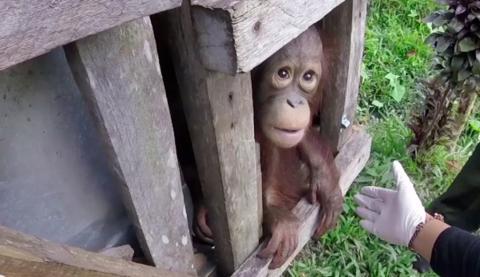 Tierretter fanden ihn alleine in einer Holzkiste eingesperrt. Dort war er 2 lange Jahre