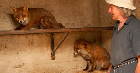 Er rettet zwei Fuchswelpen: So ergreifend danken sie es ihm