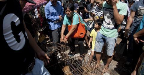 Hundefleischfestival: Die Tat einer Lehrerin ist unglaublich