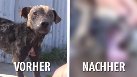 Ein Tierschutzverein rettet einen streunenden, halbtoten Hund von der Straße.