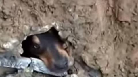 Ein Mann rettet einen nach einem Erdrutsch gefangenen Hund.