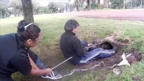 Spektakuläre Rettung zweier Welpen aus einem Abflussrohr