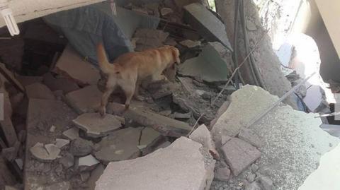 Rettungshund Dayco stirbt an Erschöpfung, nachdem er sieben Menschenleben gerettet hat!