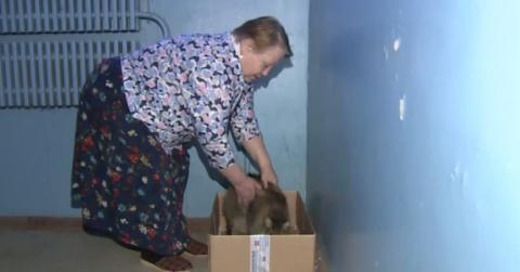 Frau hört lautes Miauen: Da sieht sie, was die Katze im Karton entdeckt hat!