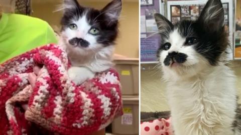 Sally Ann: Die schnurbärtige Katze hat eine zweite Chance bekommen