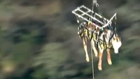 Spektakuläre Rettung eines Pferdes per Hubschrauber