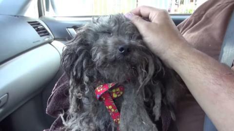 Dieser ausgesetzte Hund hat eine zweite Chance bekommen. Eine rührende Geschichte.