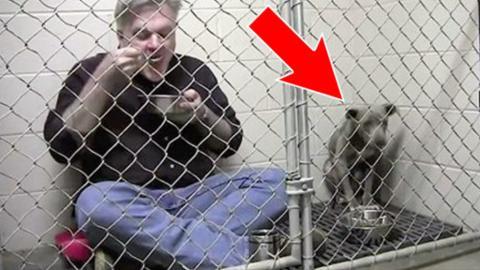Er setzt sich zu der Hündin in den Käfig. Was folgt ist einfach atemberaubend!