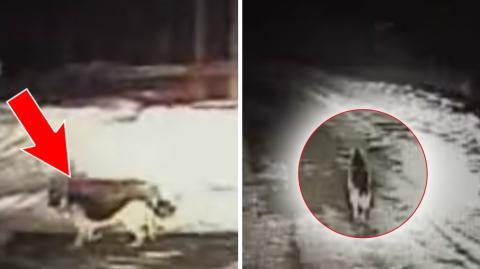 Ein Hund begegnet einem Polizeiauto und fängt an zu rennen. Was er dann tut wird euch überraschen!