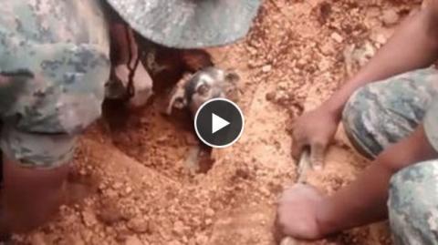 Nach 18 Stunden unter der Erde wird dieser Hund von Helfern gerettet - ein sehr emotionaler Moment.