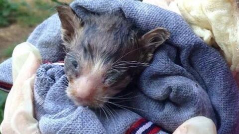 Sie finden das kleine Kätzchen in hoffnungslosem Zustand bei den Müllcontainern...Das Urteil des Tierarztes verschlägt ihnen die Sprache!