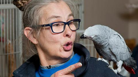 Kaum ist das Frauchen aus dem Haus: Papagei bestellt Essen im Internet