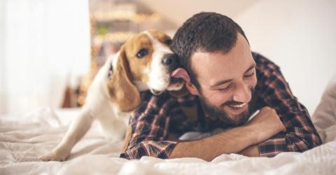 Studie beweist: Hunde sind Männern im Bett vorzuziehen