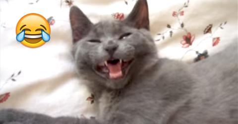 Ihre Katze möchte nicht aufstehen und gibt ihr die beste Antwort, die eine Katze geben kann!