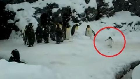 Glücklich im Schnee... Der glücklichste Pinguin der Welt