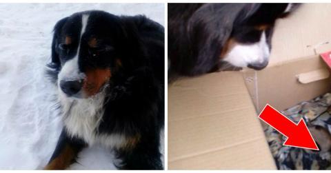 Ein Hund findet einen Karton mit zwei kleinen Kätzchen im Schnee