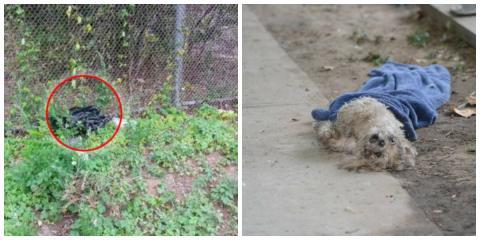 Eine Frau schmeißt ihren armen, kranken Hund aus dem Auto. Doch damit hat sie nun wirklich nicht gerechnet...