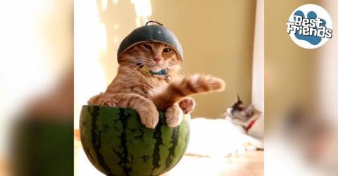 In diesem Panzer droht der Katze nichts!