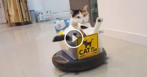 Staubsauger-Roboter plus Katze gleich... Katzentaxi!