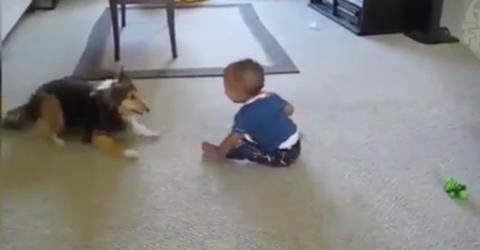 Aufmerksam beobachtet das Kind sein Hündlein: Es kann nich fassen, was der da treibt