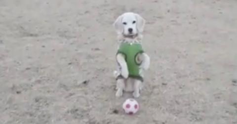 Sie wirft ihrem Welpen einen Ball zu, doch er reagiert unglaublich!