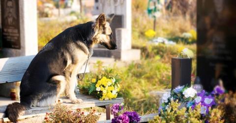 Hund besucht 11 Jahre lang das Grab seines Herrchens, doch jetzt nimmt die Geschichte eine traurige Wendung
