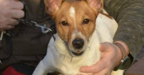 Erst geklaut, dann ausgesetzt: Hund Basi hat ein trauriges Schicksal