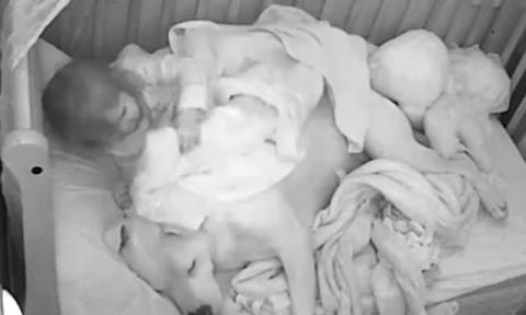 Pitbull schläft bei kleinem Mädchen im Bett. Dann passiert das Unerwartete